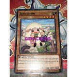 BOYCOTON ( FLOD-FR035 )